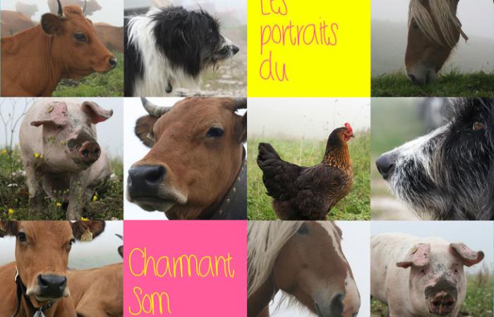 charmant-som-portraits-text_blog2
