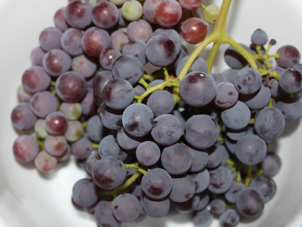 blog_may19_grapes