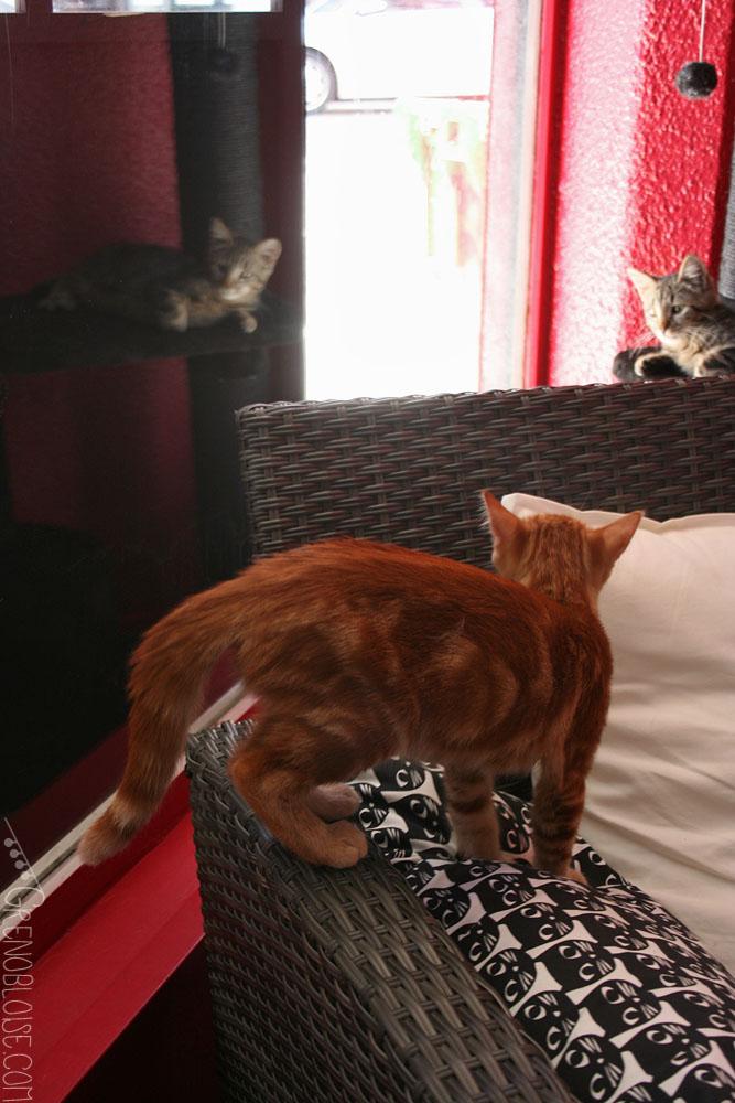 charabica bar chats grenoble cat caf in grenoble grenobloise. Black Bedroom Furniture Sets. Home Design Ideas